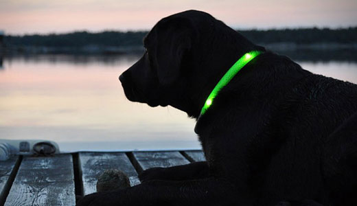 Zgardă luminoasă câini