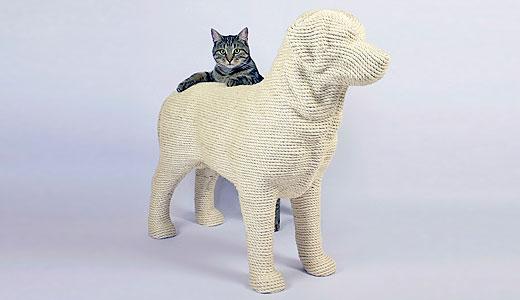 Caine perfect pentru pisica