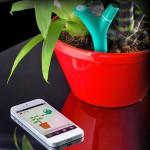 senzor iPhone plante ornamentale