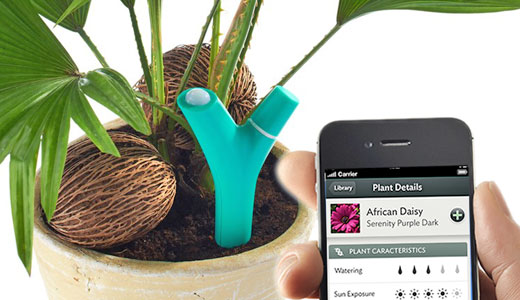 senzor iPhone plante ornamentale