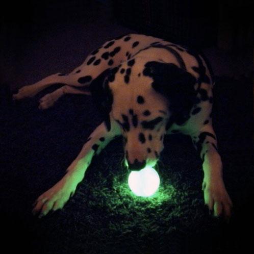 minge fosforescenta caine noaptea