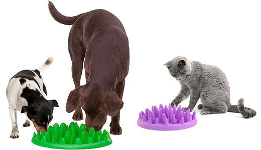 Castron farfurie interactiva Catch slow-food pentru caini si pisici